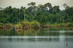 Rio na floresta decíduo Imagens de Stock Royalty Free