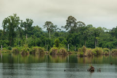 Rio na floresta decíduo Imagens de Stock