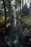 Rio na floresta do outono imagens de stock royalty free