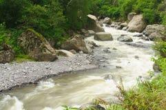 Rio na floresta húmida Foto de Stock