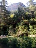 Rio na floresta, luz do dia Imagem de Stock
