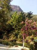 Rio na floresta, luz do dia, alvorecer, árvore dos flowets Imagens de Stock Royalty Free