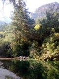 Rio na floresta, luz do dia, alvorecer Imagem de Stock Royalty Free