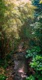Rio na floresta imagens de stock royalty free