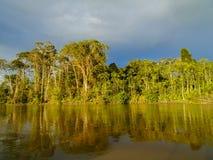 Rio Napo Royaltyfri Foto