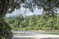 Rio Napo, Misahualli, Ecuador lizenzfreies stockfoto