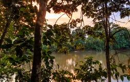 Rio Napo. A view of the Rio Napo Royalty Free Stock Image