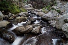 Rio nas madeiras Imagem de Stock