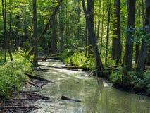 Rio natural da floresta no meio-dia do verão fotos de stock royalty free