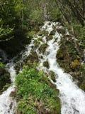 Rio natural da mola fotos de stock
