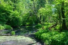 Rio natural de Lesna no meio-dia do verão fotos de stock royalty free