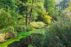 Rio natural de Lesna no meio-dia do verão foto de stock royalty free
