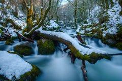 Rio nevado com tronco musgoso Foto de Stock