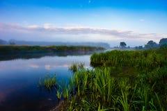 Rio nevoento cercado pela vegetação luxúria Céu azul no nascer do sol foto de stock