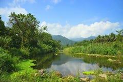 Rio no prado e em árvores verde-claro Imagem de Stock Royalty Free