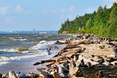 Rio Ob, região de Novosibirsk Fotografia de Stock