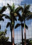 Rio palms Royalty Free Stock Photo