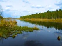 Rio pequeno da floresta na mola imagens de stock