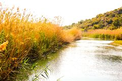 Rio pequeno em um parque natural do pantanal fotos de stock
