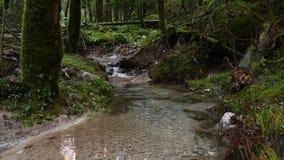 Rio pequeno na floresta vídeos de arquivo