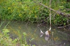 Rio pequeno na paisagem adiantada da mola Fotografia de Stock Royalty Free