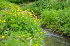 Rio pequeno na paisagem adiantada da mola Imagem de Stock