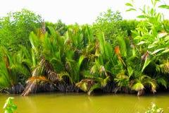 Rio pequeno perto das plantas tropicais Fotografia de Stock