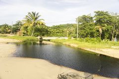Rio perto da árvore do whith da praia imagem de stock royalty free