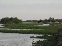 Rio povoado com plantas imagem de stock royalty free