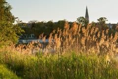 Rio próximo de lingüeta dourado retroiluminado Danúbio em Viena Fotografia de Stock Royalty Free