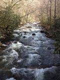Rio que corre através das árvores Fotos de Stock Royalty Free
