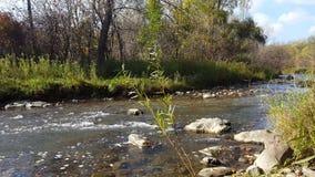 Rio que flui com os pedregulhos perto da costa no outono vídeos de arquivo