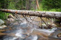 Rio que flui sob o log caído com árvores imagens de stock royalty free