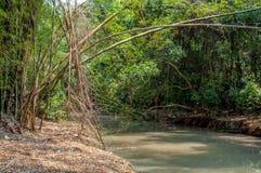 Rio que passa entre o grovesRiver de bambu que passa entre os bosques de bambu Foto de Stock