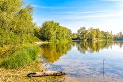 Rio quieto com árvores imagem de stock