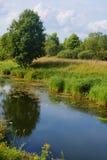 Rio quieto com reflexão da árvore e de gramas de florescência, Russi Fotografia de Stock Royalty Free