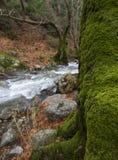 Rio rápido montanhoso com água clara e uma árvore coberto de vegetação com o musgo na floresta nas montanhas Dirfys na ilha de foto de stock