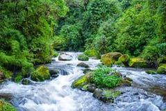 Rio Savegre, een gebrulrivier dichtbij San Gerado DE Dota, Costa Rica stock foto