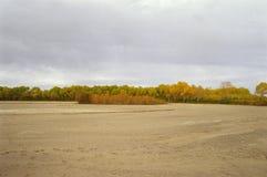 Rio seco e as árvores Imagens de Stock