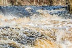 Rio selvagem Fotografia de Stock