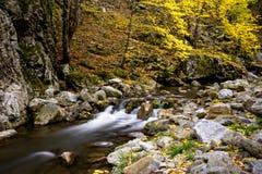Rio selvagem da montanha com a cachoeira pequena na queda Fotos de Stock Royalty Free