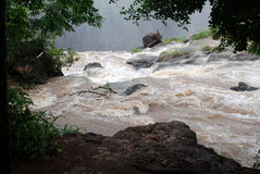 Rio sujo Zambezi do córrego (África) Imagens de Stock