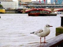 Rio Tamisa Fotografia de Stock