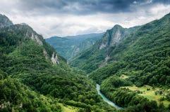 Rio Tara da montanha e floresta em Montenegro fotografia de stock