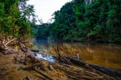 Rio Tembeling em Taman Negara, Malásia Fotos de Stock