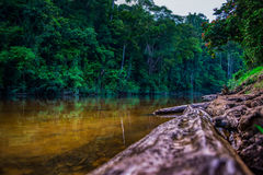 Rio Tembeling em Taman Negara, Malásia Imagem de Stock
