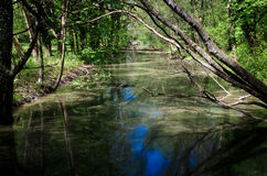 Rio tranquilo Fotografia de Stock