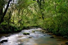 Rio tropical Fotografia de Stock Royalty Free