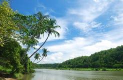 Rio tropical foto de stock