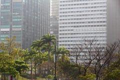 Rio urban jungle. Urban jungle of Rio de Janeiro. Office buildings and palm trees royalty free stock photography